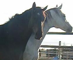 Minton & Kadence August 2011a